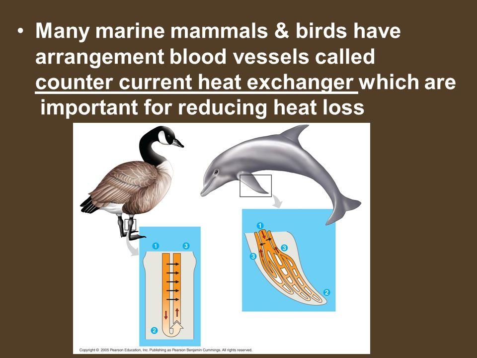 important for reducing heat loss
