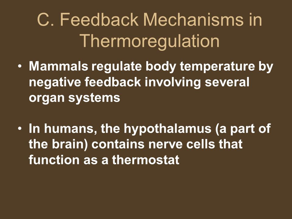 C. Feedback Mechanisms in Thermoregulation