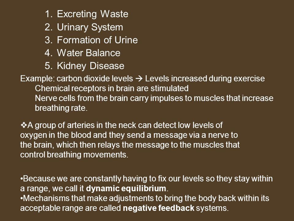 Excreting Waste Urinary System Formation of Urine Water Balance