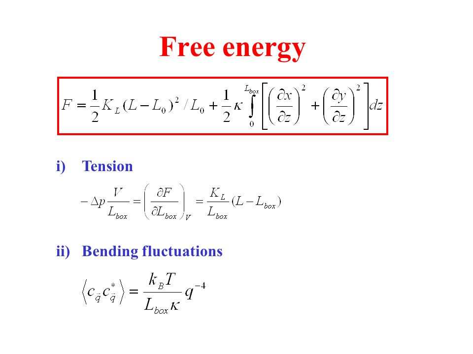 Free energy Tension Bending fluctuations