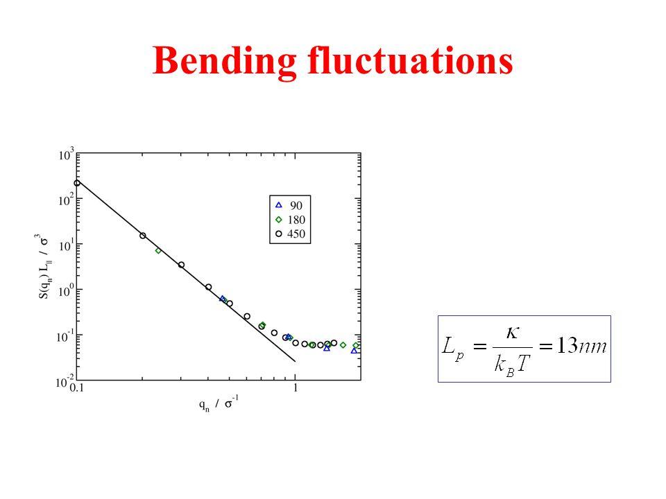 Bending fluctuations