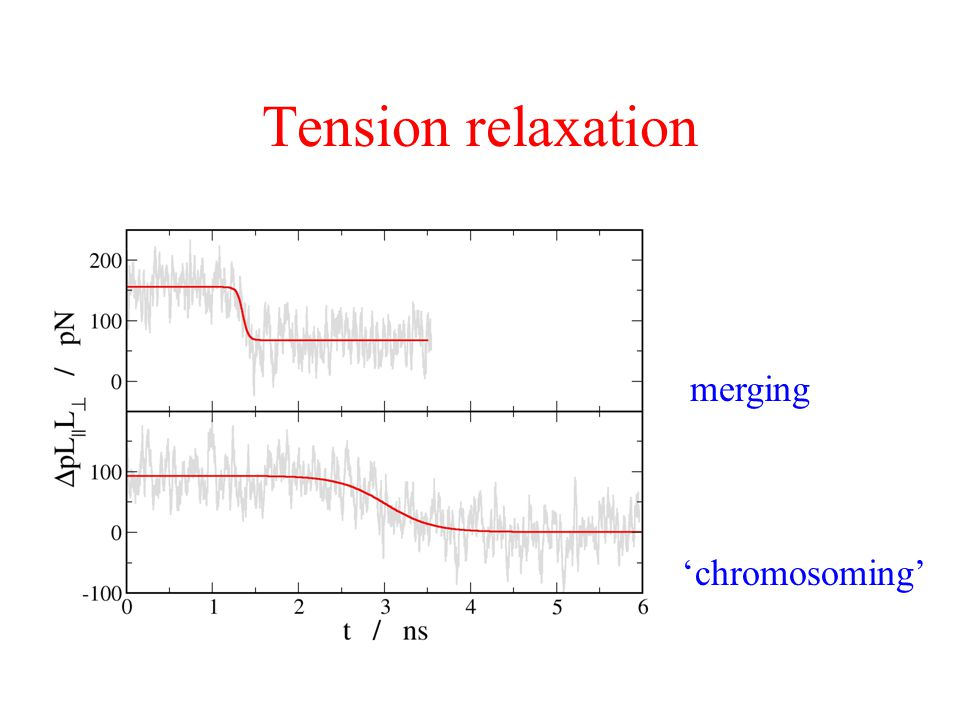 Tension relaxation merging 'chromosoming'