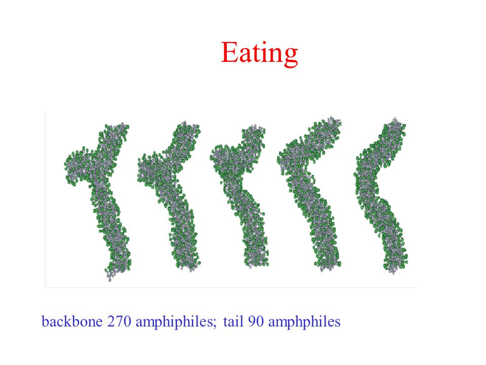 Eating backbone 270 amphiphiles; tail 90 amphphiles