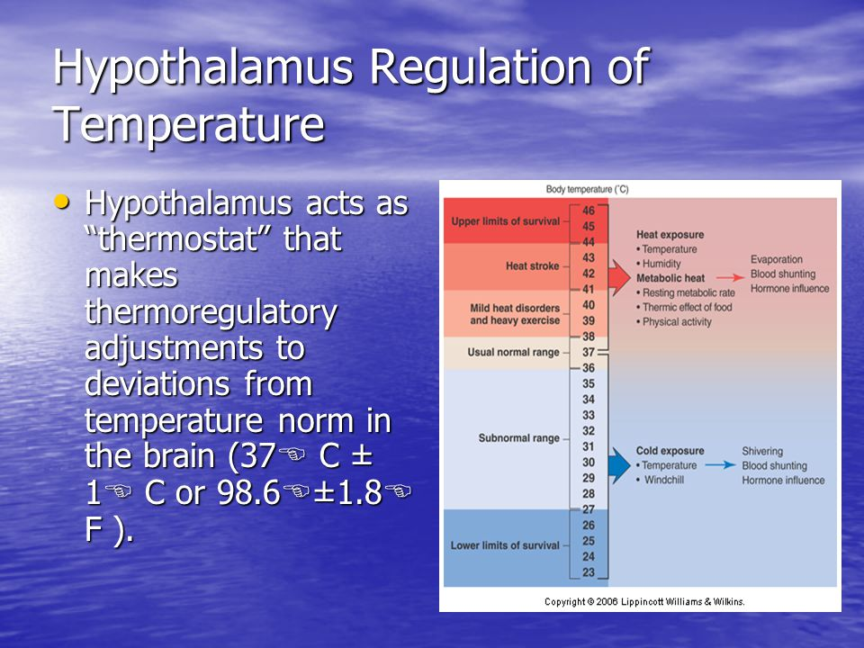 Hypothalamus Regulation of Temperature