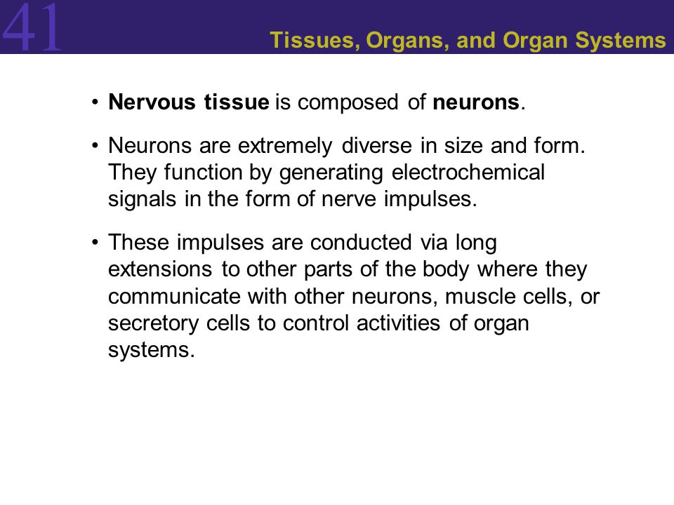 Tissues, Organs, and Organ Systems