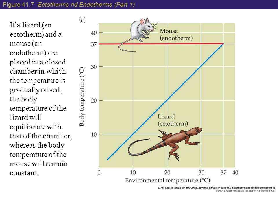 Figure 41.7 Ectotherms nd Endotherms (Part 1)