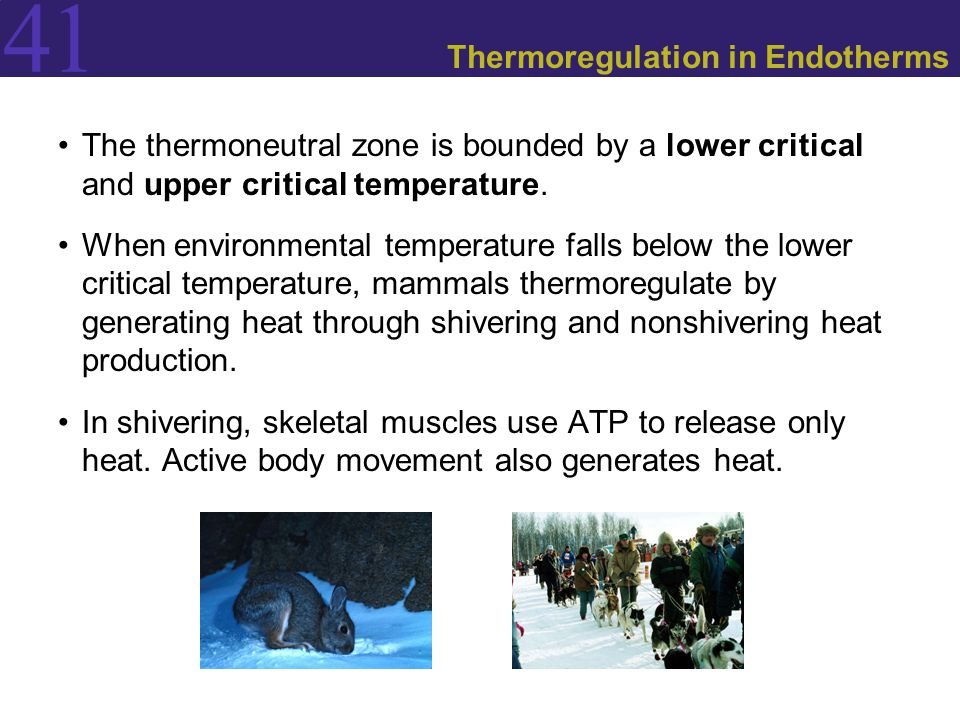 Thermoregulation in Endotherms
