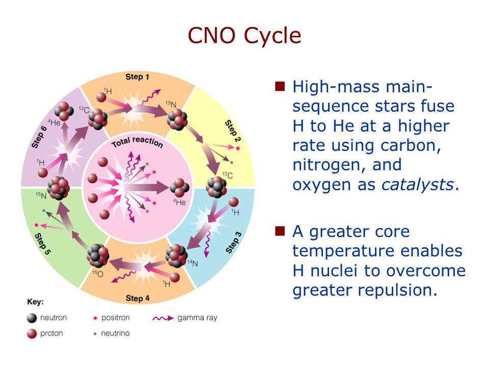 CNO Cycle High-mass main- sequence stars fuse H to He at a higher rate using carbon, nitrogen, and oxygen as catalysts.