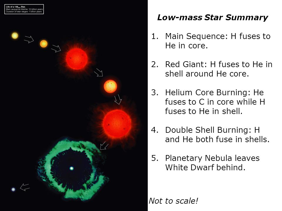 Low-mass Star Summary Main Sequence: H fuses to He in core. Red Giant: H fuses to He in shell around He core.