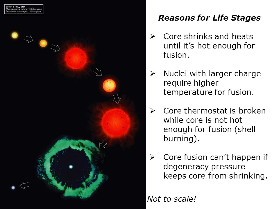 Reasons for Life Stages