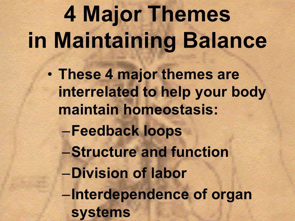 4 Major Themes in Maintaining Balance