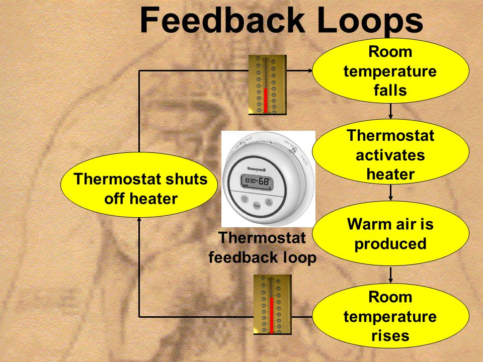 Feedback Loops Room temperature falls Thermostat activates heater