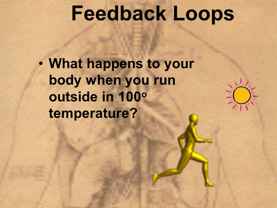 Feedback Loops What happens to your body when you run outside in 100o temperature