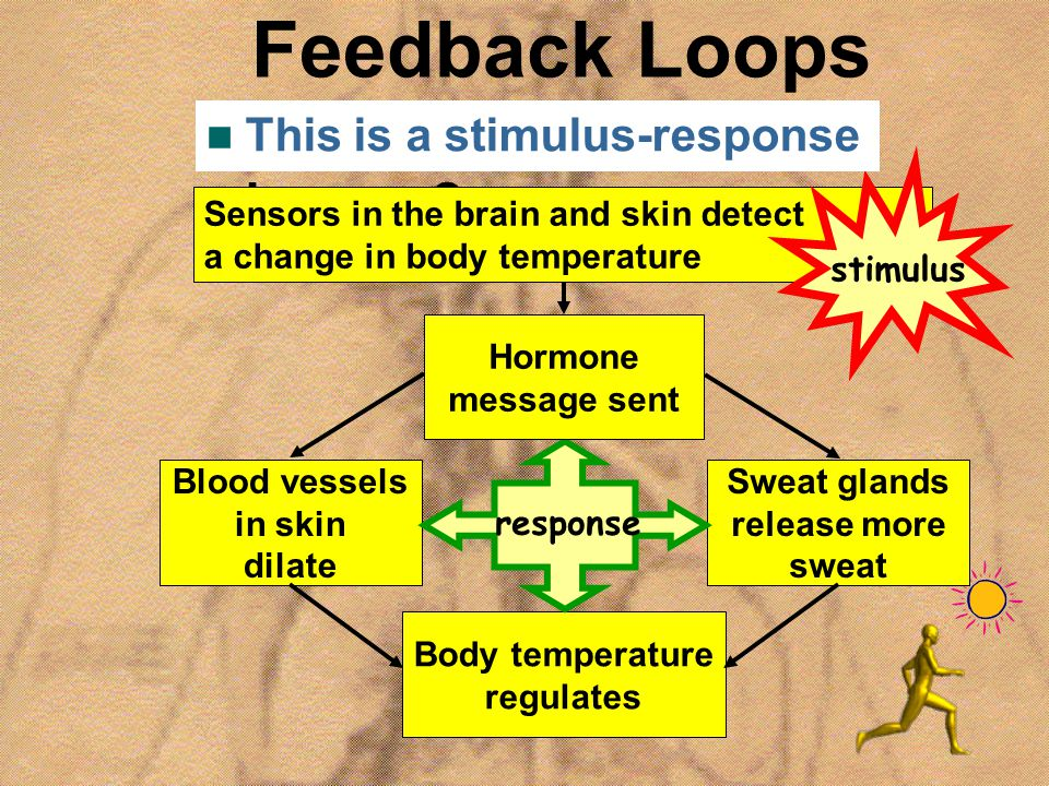 Feedback Loops How does this happen This is a stimulus-response