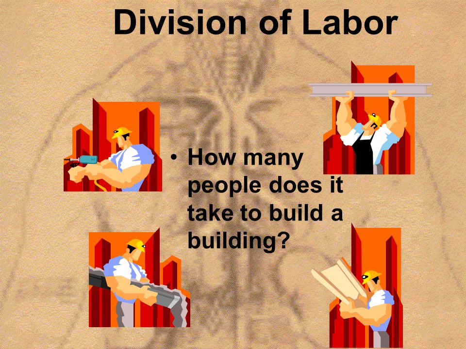 Division of Labor How many people does it take to build a building