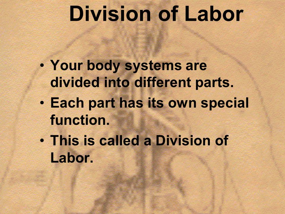 Division of Labor Your body systems are divided into different parts.