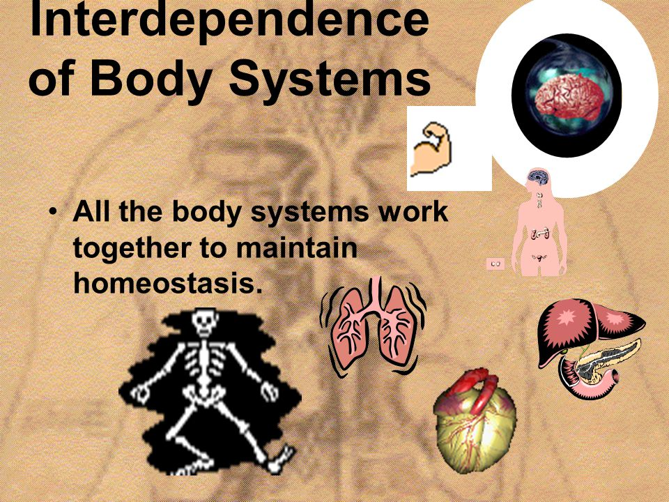 Interdependence of Body Systems