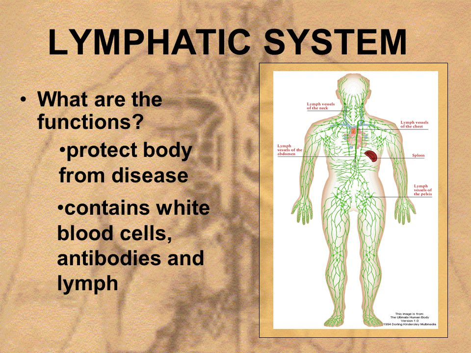 LYMPHATIC SYSTEM What are the functions protect body from disease