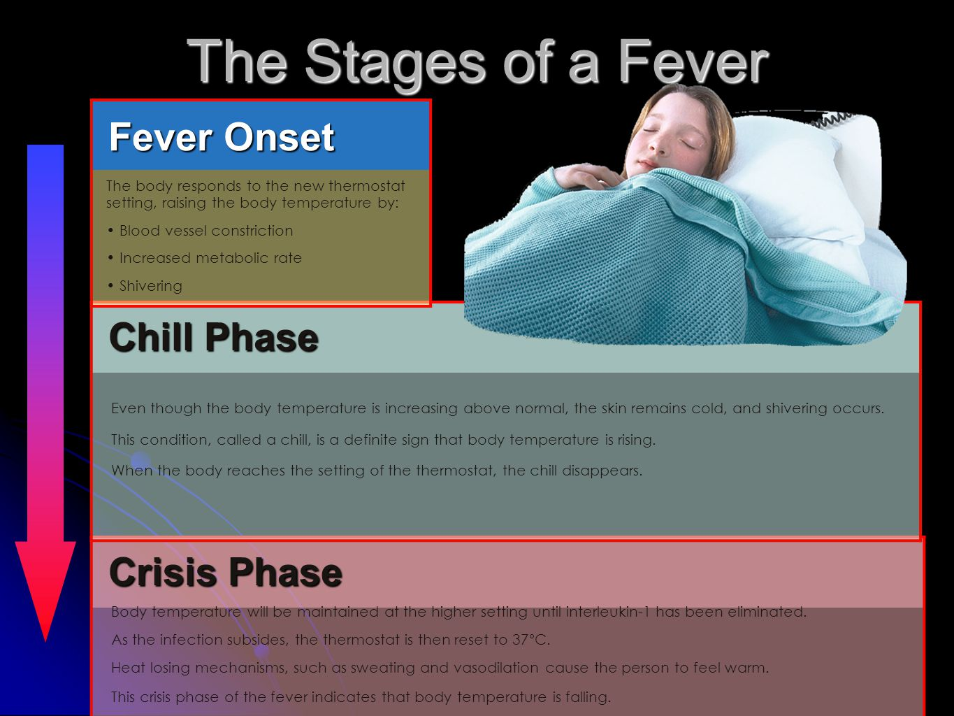 The Stages of a Fever Fever Onset Chill Phase Crisis Phase