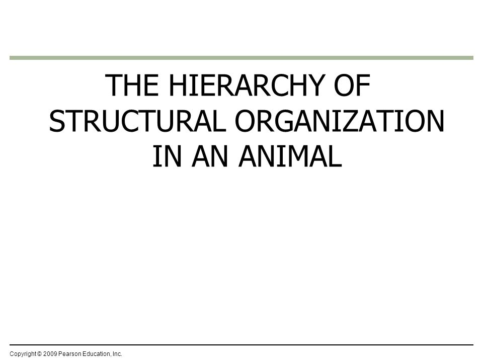 THE HIERARCHY OF STRUCTURAL ORGANIZATION IN AN ANIMAL
