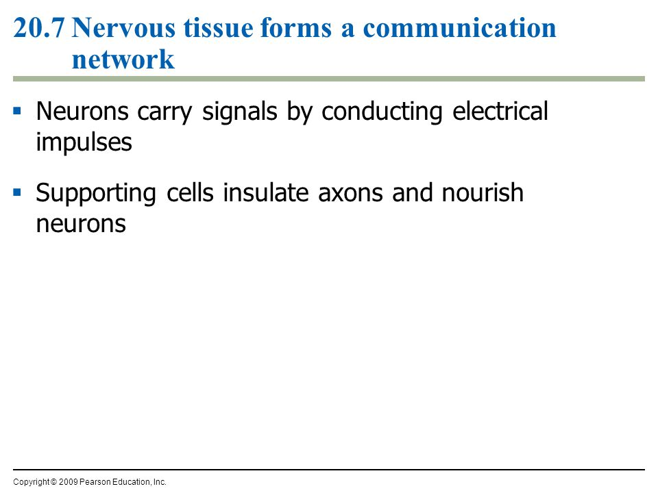 20.7 Nervous tissue forms a communication network
