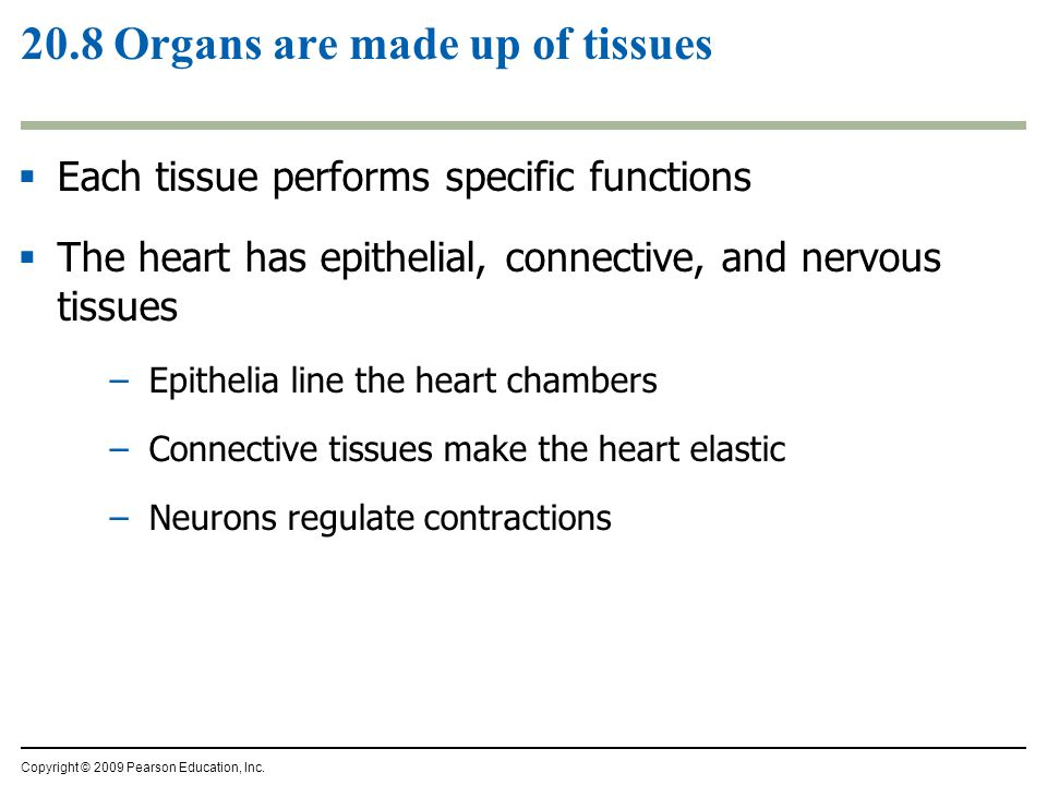 20.8 Organs are made up of tissues