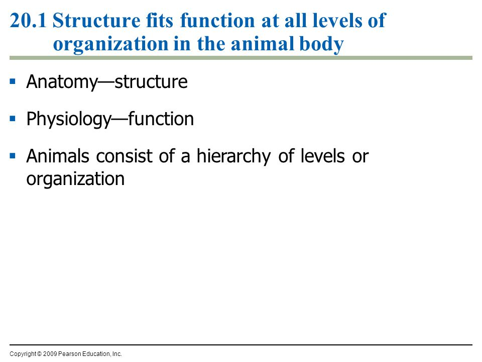 20.1 Structure fits function at all levels of organization in the animal body