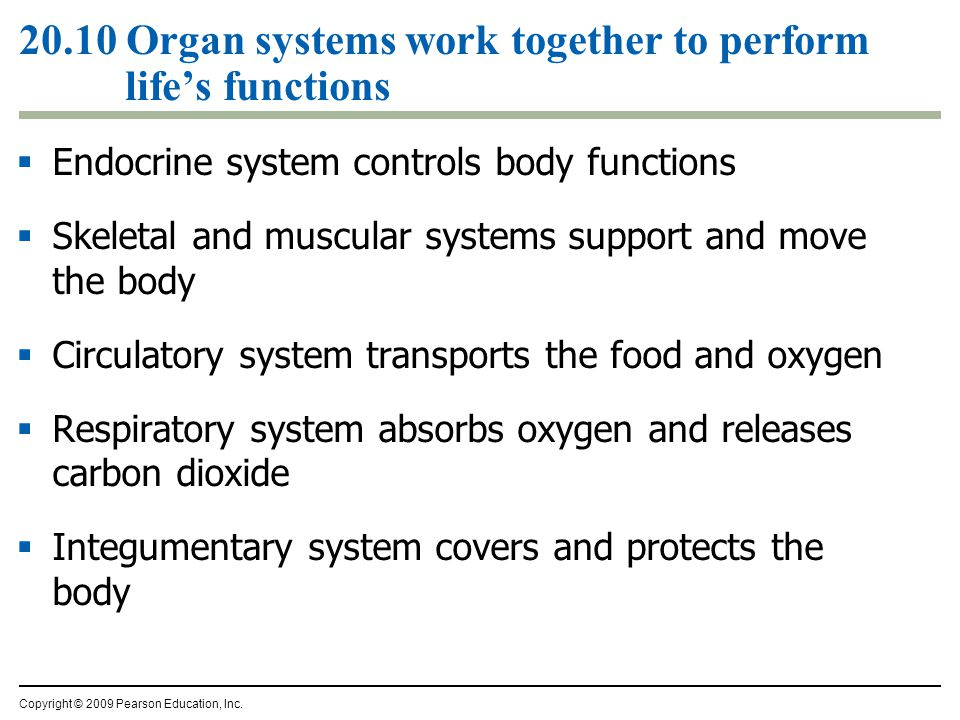 20.10 Organ systems work together to perform life's functions