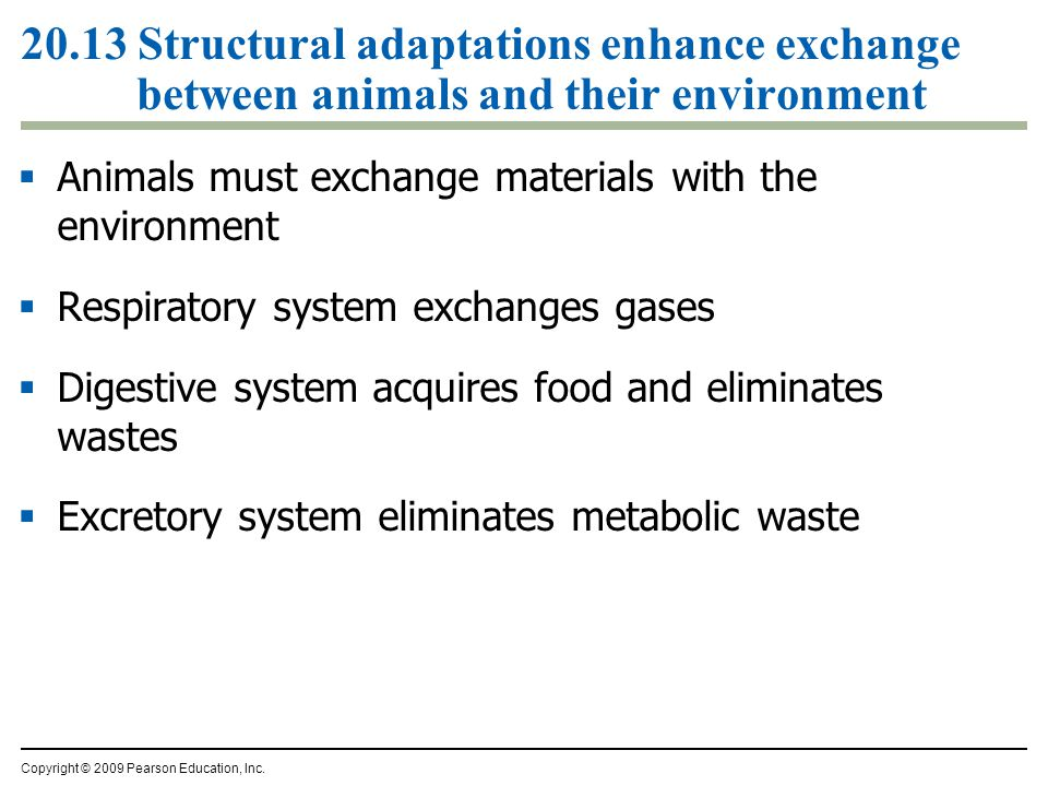 20.13 Structural adaptations enhance exchange between animals and their environment
