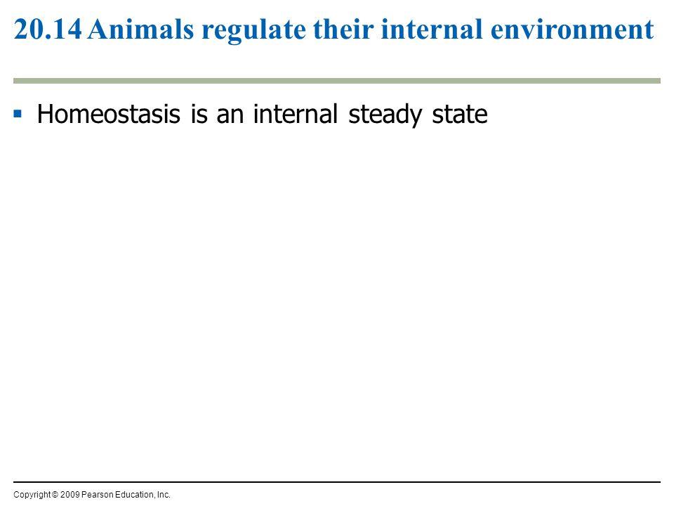 20.14 Animals regulate their internal environment