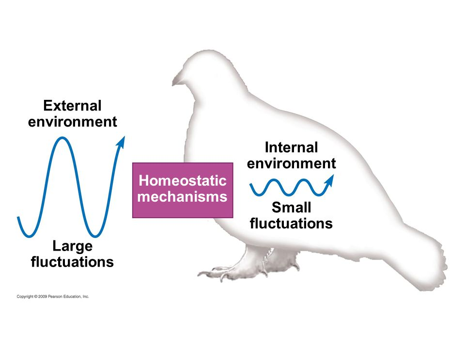External environment Internal environment Homeostatic mechanisms Small