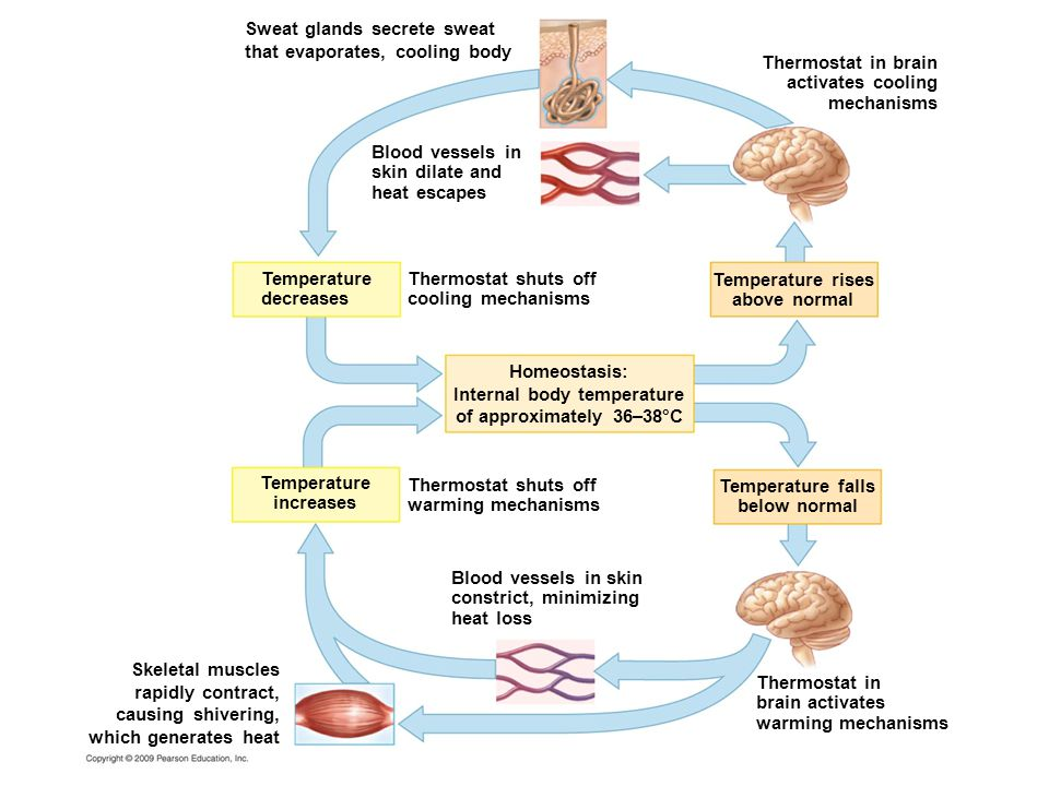 Internal body temperature