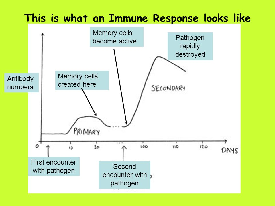 This is what an Immune Response looks like