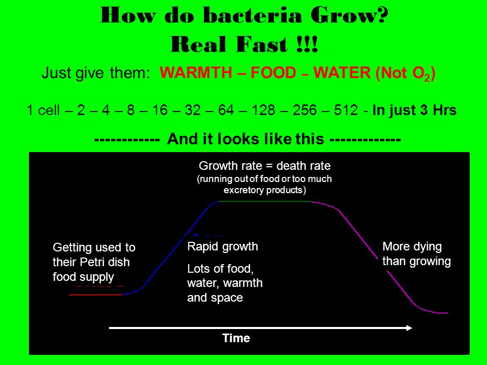 How do bacteria Grow Real Fast !!!
