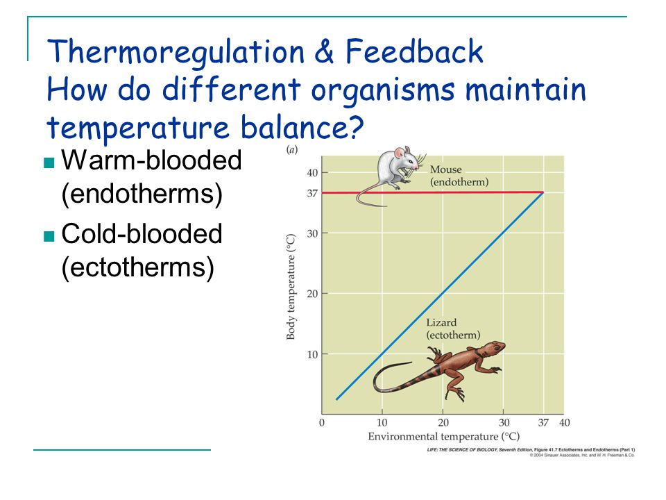 Thermoregulation & Feedback How do different organisms maintain temperature balance