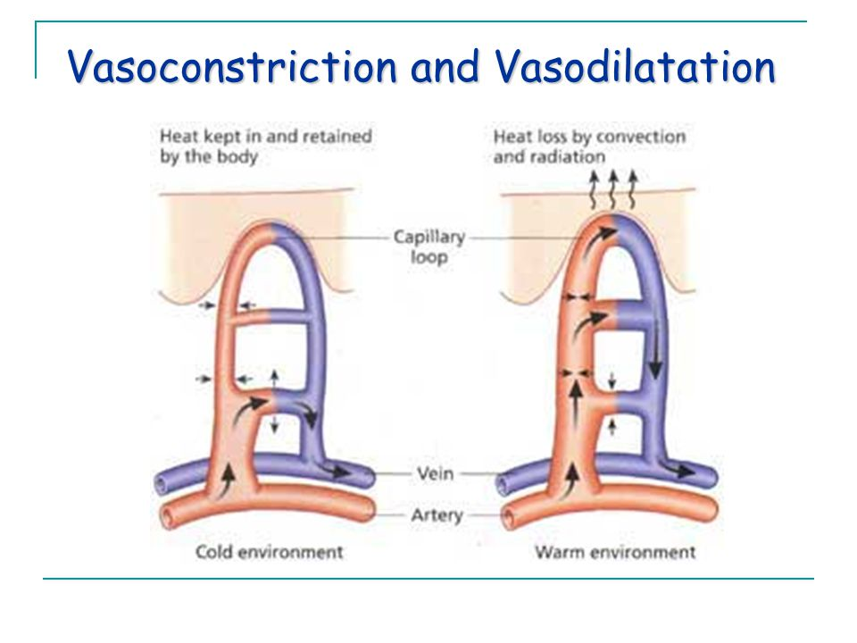Vasoconstriction and Vasodilatation