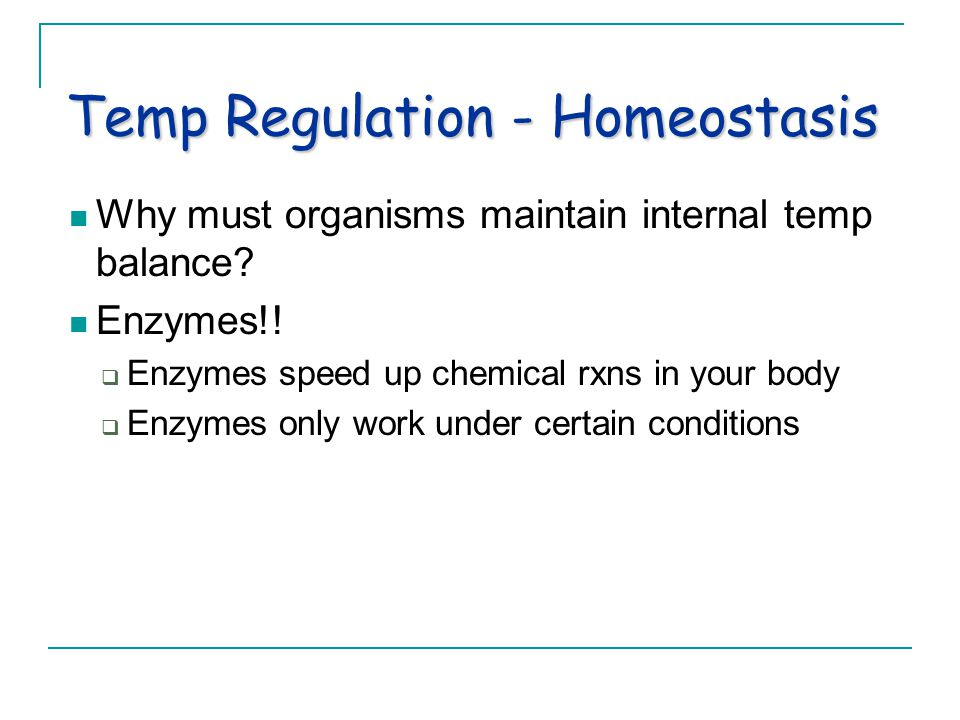 Temp Regulation - Homeostasis