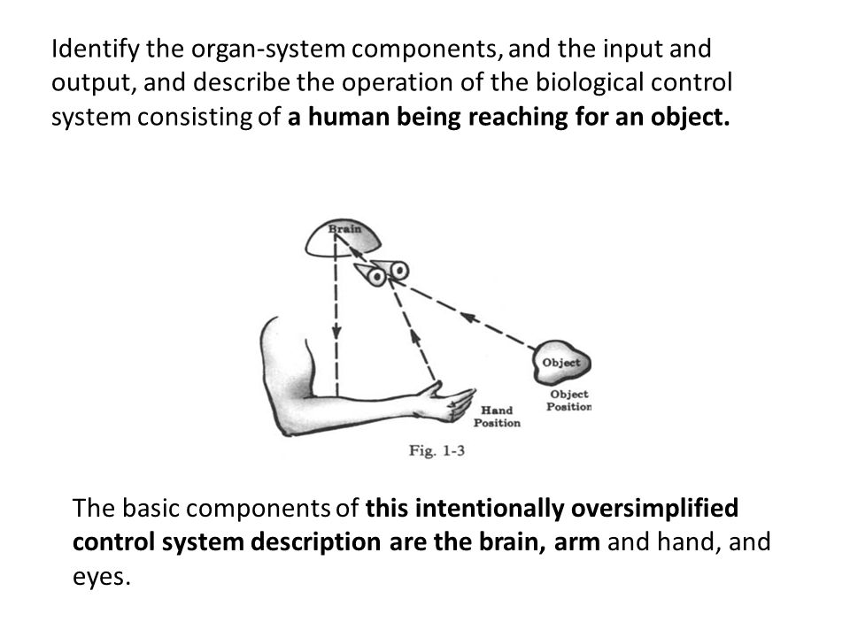 Identify the organ-system components, and the input and output, and describe the operation of the biological control system consisting of a human being reaching for an object.