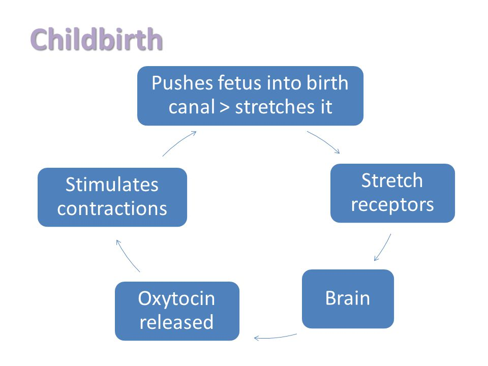 Childbirth Pushes fetus into birth canal > stretches it