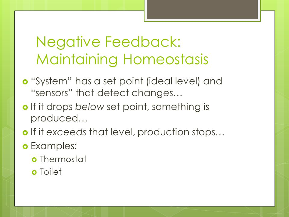 Negative Feedback: Maintaining Homeostasis