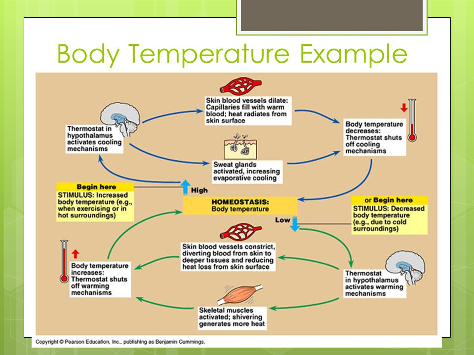 Body Temperature Example