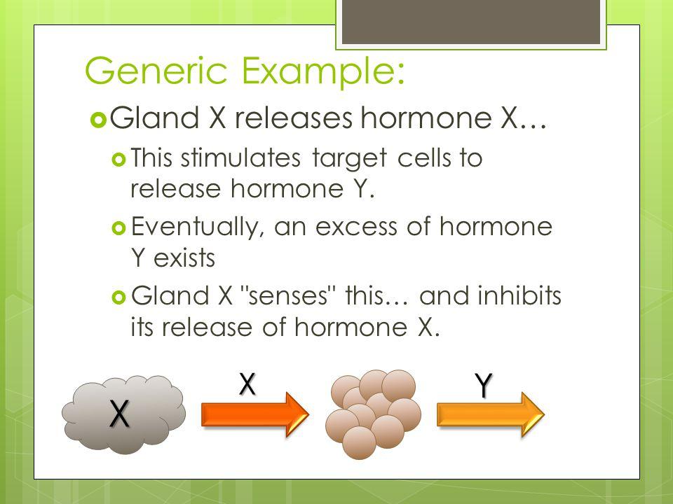 Generic Example: X Y Gland X releases hormone X… X