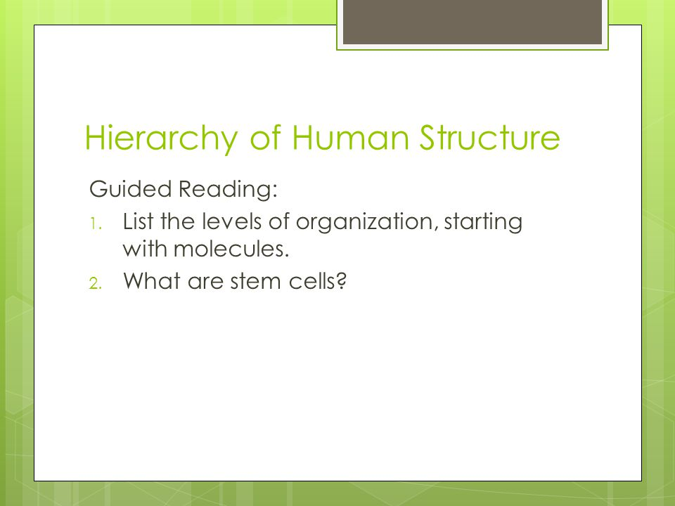 Hierarchy of Human Structure