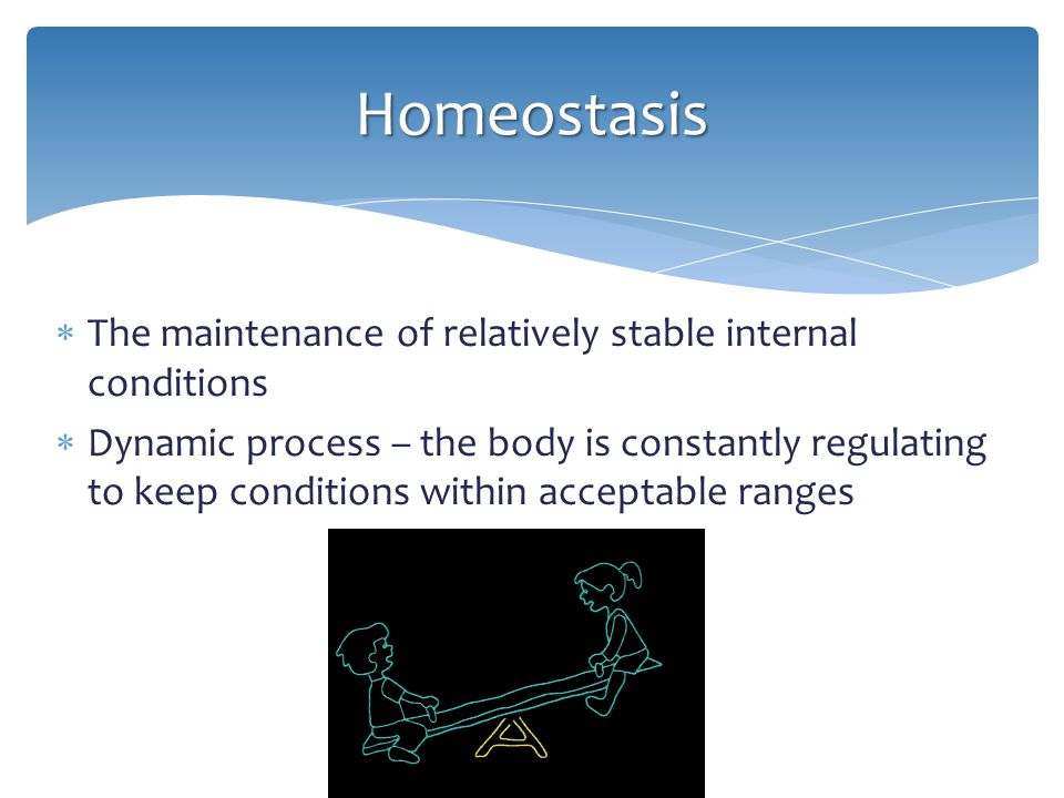 Homeostasis The maintenance of relatively stable internal conditions