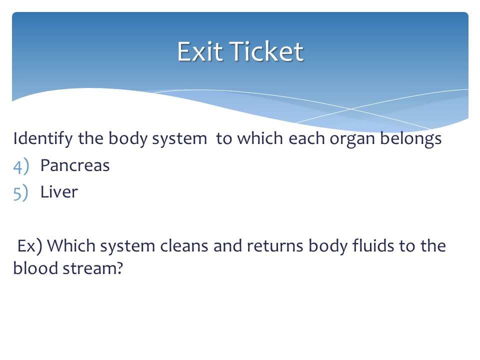 Exit Ticket Identify the body system to which each organ belongs