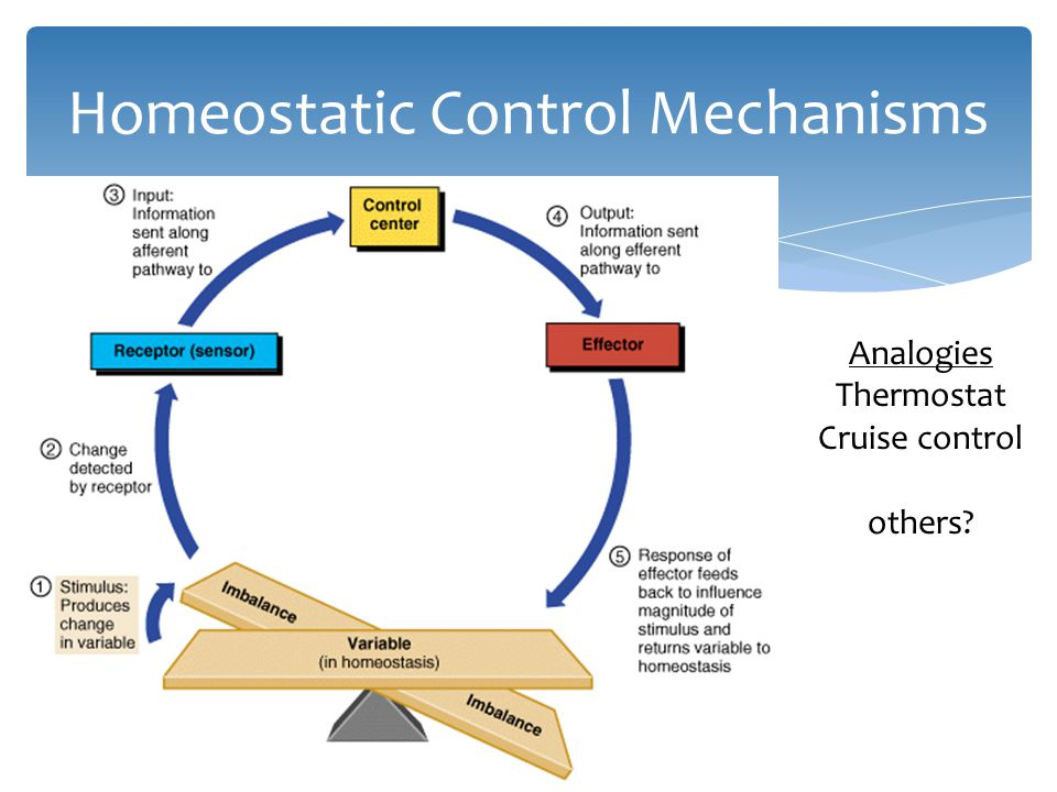 homeostatic mechanism It is through homeostatic mechanisms that body temperature is kept within normal range,  see also feedback mechanism homeostasis.