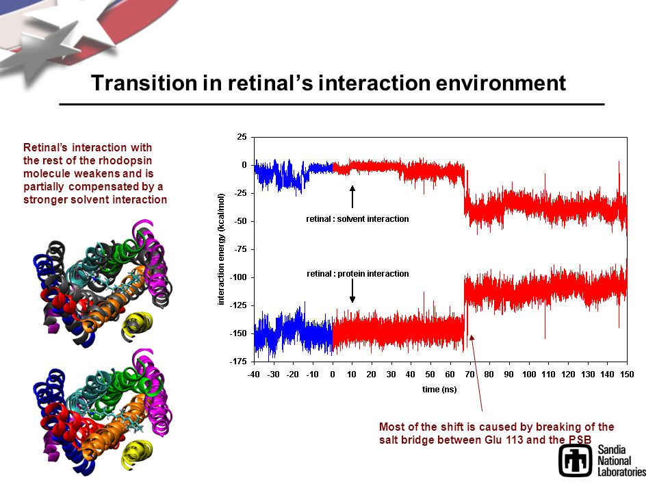 Transition in retinal's interaction environment