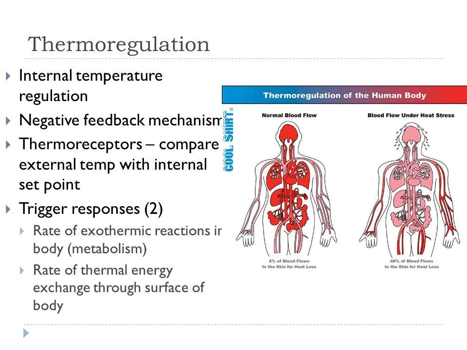 Thermoregulation Internal temperature regulation
