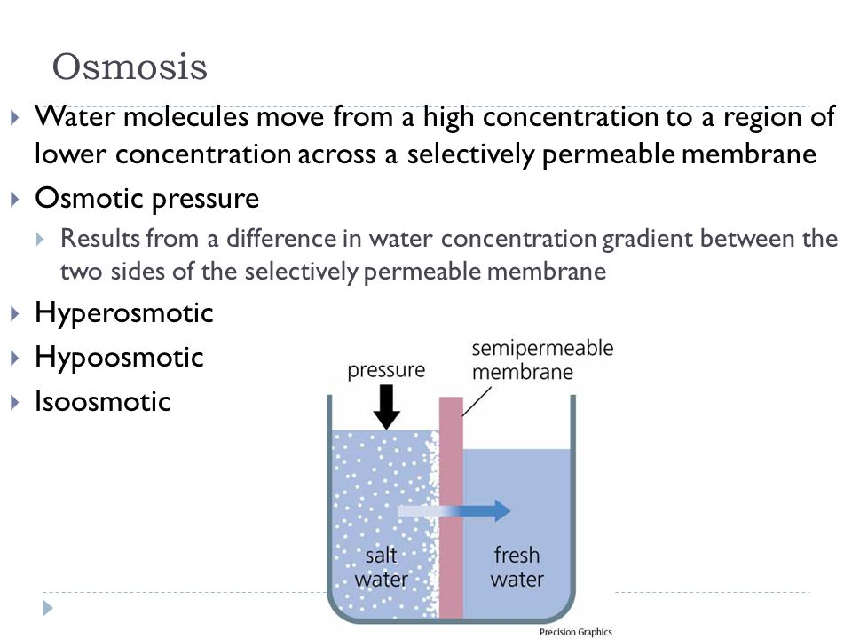 Osmosis Water molecules move from a high concentration to a region of lower concentration across a selectively permeable membrane.