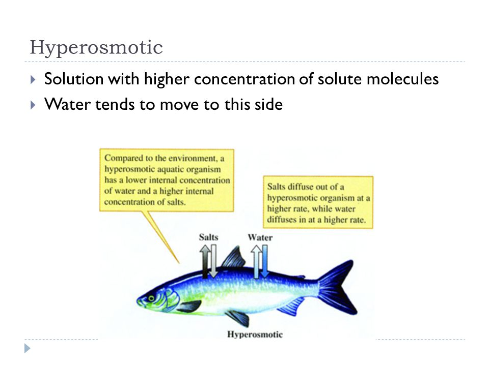 Hyperosmotic Solution with higher concentration of solute molecules